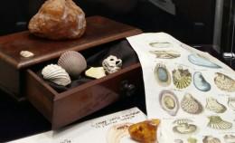 Minerals through theeyes ofthenaturalist oft...