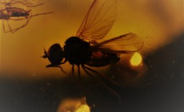 "Virtual exhibition ""Flies in Amber"""