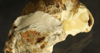 Почему белый янтарь высоко ценится: экспертное м...