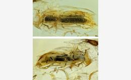 Новости научного отдела: описан новый вид