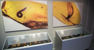 Выставка «Доисторические насекомые в янтаре» в С...