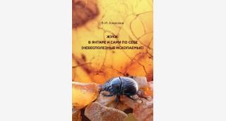 Взгляд на жуков через янтарные очки