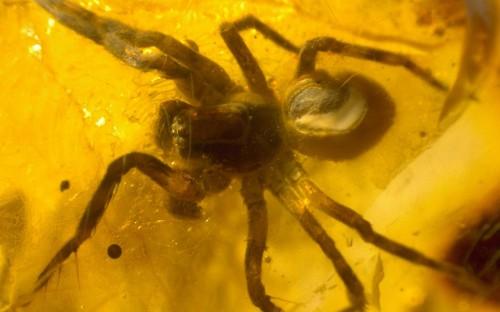 Рис. 32. Паук из семейства Lycosidae (пауки-волки)