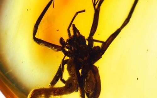 Рис. 58. Личинка наездника Polysphinctinae (Hymenoptera, Ichneumonidae), паразитирующая на пауке