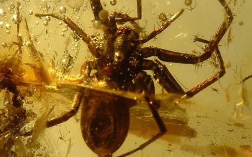 Рис. 22. Пауки (Arachnida, Araneida) с различной формой тела