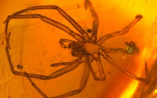 Рис. 53. Экзувии пауков