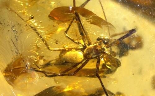 Рис. 31. Паук из семейства Synotaxidae